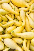 Yellow or crook neck squash on display — Stock Photo