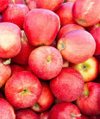 Red Gala apples on display — Stock Photo