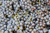 Grapes on display at the farmers market — Stock Photo