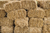 Hay bales stacked and drying — Stock Photo