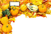 Fall or Thanksgiving or Halloween decoration isolated on white — Stock Photo