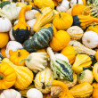 Brightly colored gourds on display — Stock Photo #9470314