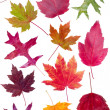 Colorful assortment of fall leaves — Stock Photo #9470445