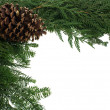 Decorative border with pinecone - Foto de Stock