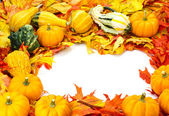 Fall border arrangement of leaves gourds pumpkins — Stock Photo