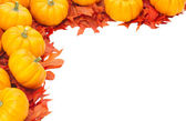 Small pumpkins on oak leaves — Stock Photo