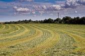 Freshly mown hay under dramatic sky — Stock Photo