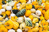 Brightly colored gourds on display — Stock Photo