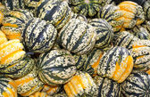 Colorful winter or acorn squash on display — Stock Photo