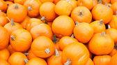 橙色南瓜显示准备好出售 — 图库照片