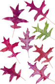 Colorful assortment of fall Oak leaves — Zdjęcie stockowe