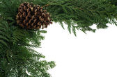 Decorative border with pinecone — Stock Photo