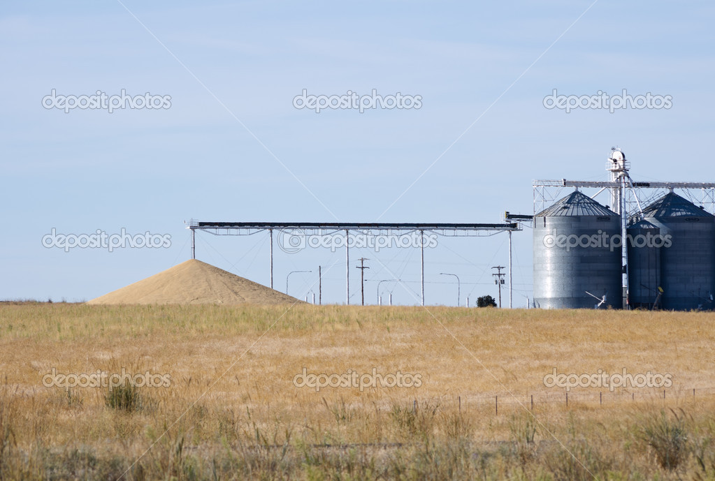 Grain being dumped on ground as excess to storage capacity — Stock Photo #9470250