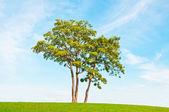 Single tree — Stock Photo