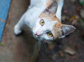 CAT of Thailand — Stock Photo