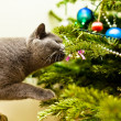 Stock Photo: Cat investigating Christmas tree