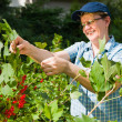 Woman and redcurrant — Stock Photo #9313609