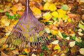 Rake and leafs — Stockfoto