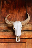 Totem the bull skull — Stock Photo