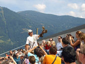 Austria - show of raptors — Stock Photo