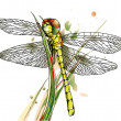 Dragonfly on grass. — Stock Vector
