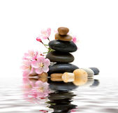 Zen / spa stones with flowers — Stock Photo