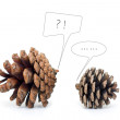 Stock Photo: Pinecone Dialogue