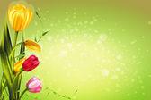 Spring tulip flowers — Stock Vector