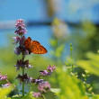 Spring scene. Butterfly on flower — Stock Photo