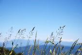 Ervas do fundo azul do céu — Foto Stock