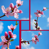 Apricot blossoms against the blue sky — Stock Photo