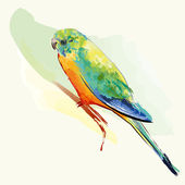 Parakeet Bird With Colorful Feather — Stock Vector