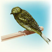 Roosting Green Canary Bird — Stock Vector