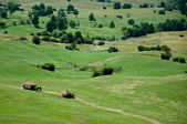 Green rolling hills and farmers collecting hay — Stock Photo