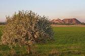 Ukrajina, doněck stepi. květen. — Stock fotografie