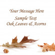 Oak Leaf and Acorn Card — Stock Photo