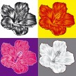 Stock Vector: Hibiscus flower blossom variations