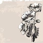 Poppy Flowers On Grunge Background — Stock Vector