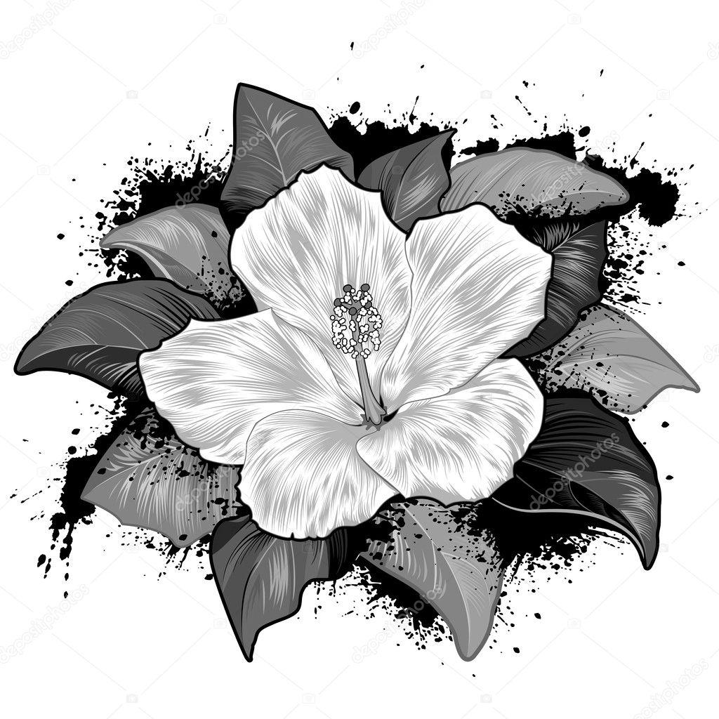 hibiskus blume zeichnen auf wei em hintergrund stockvektor jullands 9778400. Black Bedroom Furniture Sets. Home Design Ideas