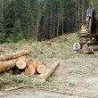 Stock Photo: Logging Operation