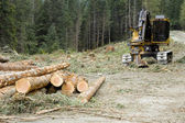 Logging Operation — Stock Photo