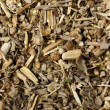 Wormwood macro - Stock Photo