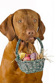 Dog holding easter basket — Stock Photo