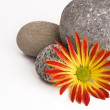 Royalty-Free Stock Photo: Flower and rocks