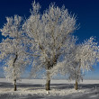 Frosty trees — Stock Photo #9577198