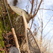 Stock Photo: Fly fishing rod and net