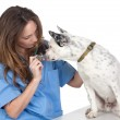 Veterinary with a dog for a review — Stock Photo #9428657