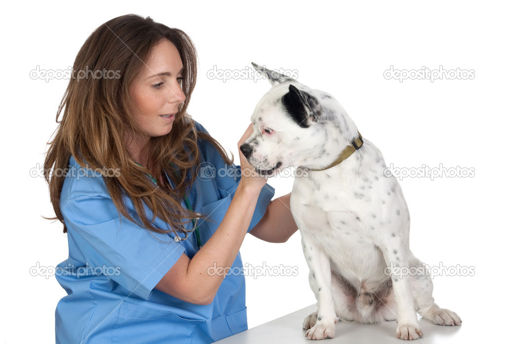 Veterinary with a dog for a review isolated on white background — Stock Photo #9428656