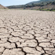 Riverbed in drought — Stock Photo
