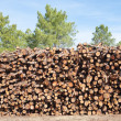 Pine firewood stacked - Stock Photo